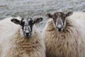 Earthquake Strikes East End of Cornwall Ontario – Sheep Upset – UFO Cited – Terry Muir Kills Lift Off  NOV 28, 2015