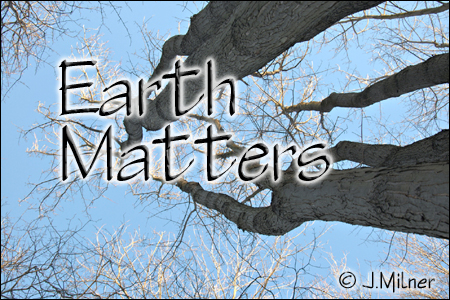 Earth Matters by Jacqueline Milner – Aronia Berries & Wetlands – March 9, 2012