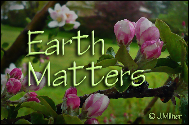 Earth Matters by Jacqueline Milner : Spring News Apple Blossoms Compost Bins Celery Experiments