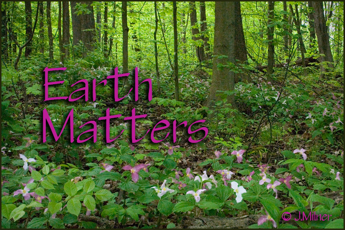 Earth Matters by Jacqueline Milner : Spring is Planting Season! Mulch, Prune, & Grow!