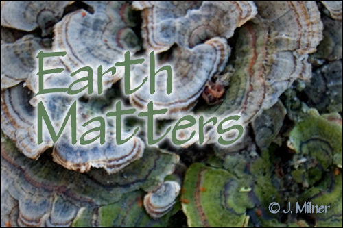 Earth Matters by Jacqueline Milner :  For Trees Sake! Story via Image – May 1, 2012