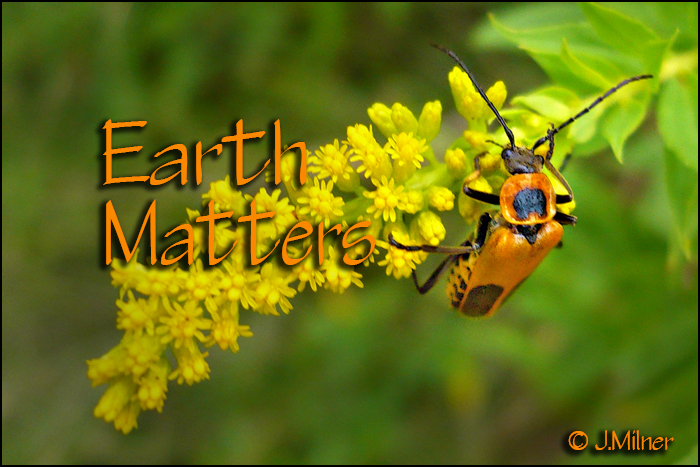 Earth Matters by Jacqueline Milner – Have you checked your Community Recycling Info? August 15, 2012