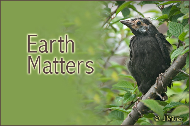 Earth Matters by Jacqueline Milner – Wild Birds & Recycling Art – August 22, 2012