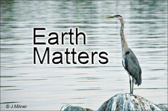 Earth Matters by Jacqueline Milner – Gypsy Moths – August 7, 2012