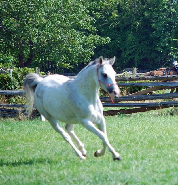 """Spirits in Unity Column 16 and introduction by Garry """"Horsetalker"""" Meek"""