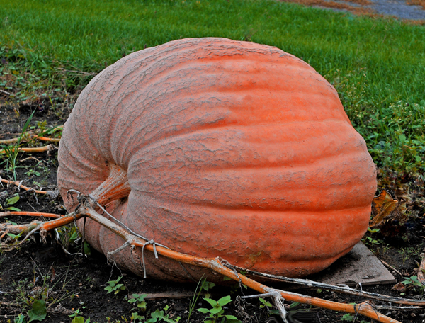 Great Pumpkins!   Your Cornwall Free News Photo of the Day from Calvin Hanson – October 7, 2012