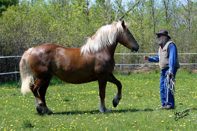"""Spirits in Unity  Column 27 – Confidence (Put the Relationship First) and introduction by Garry """"Horsetalker"""" Meek"""