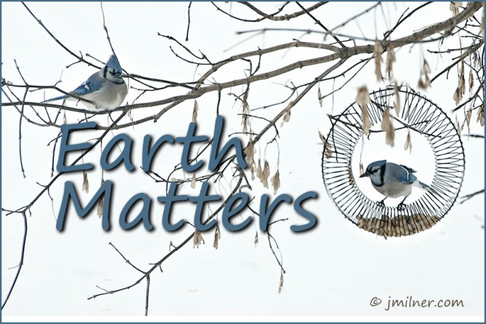 Earth Matters by Jacqueline Milner – The One Idea That Saves The World.  Interested?