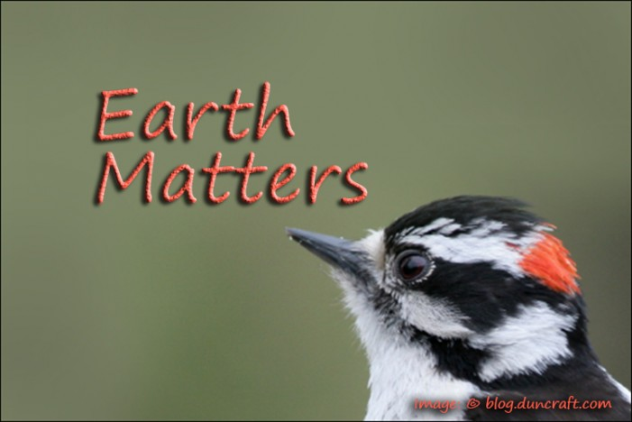 Earth Matters by Jacqueline Milner – Wild Bird Care Centre – December 6, 2012
