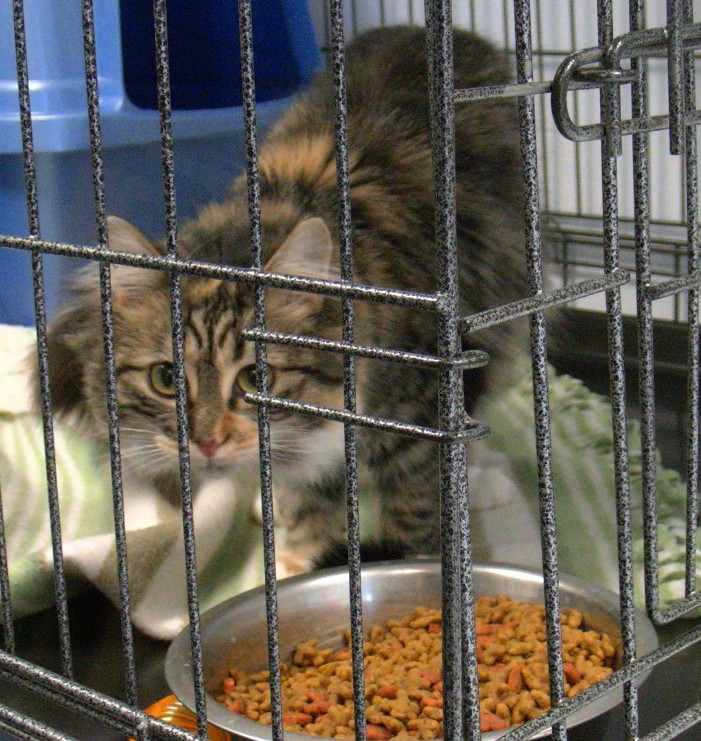 SPCA Valleyfield Finds Homes for Over 200 Cats by Giving them away!  HD VIDEO – January 9, 2013