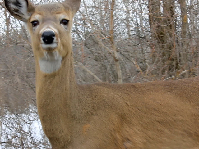 Taking a Walk on the Wild side in Morrisburg Ontario – Your CFN Photo / Video of the Day