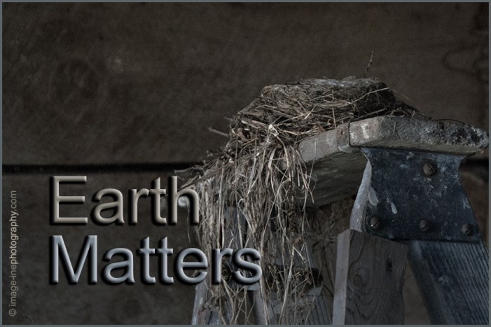Easy yard work in chewable chunks with the right tools…Earth Matters by Jacqueline Milner.