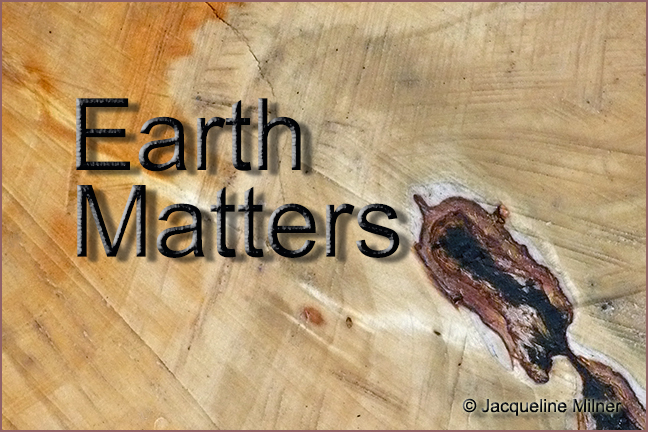 Earth Matters by Jacqueline Milner – Goodbye Friend – Sad End to a Tree