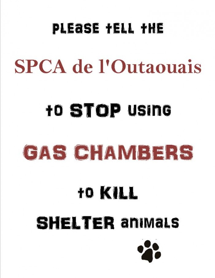 Take Action Against Animal Gas Chambers Has Protest at SPCA Outaouais Saturday June 1, 2013
