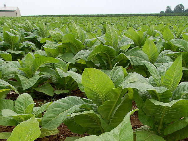 Akwesasne Tobacco Pilot Project funded by Ontario Government