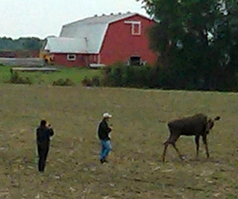 moose 2a