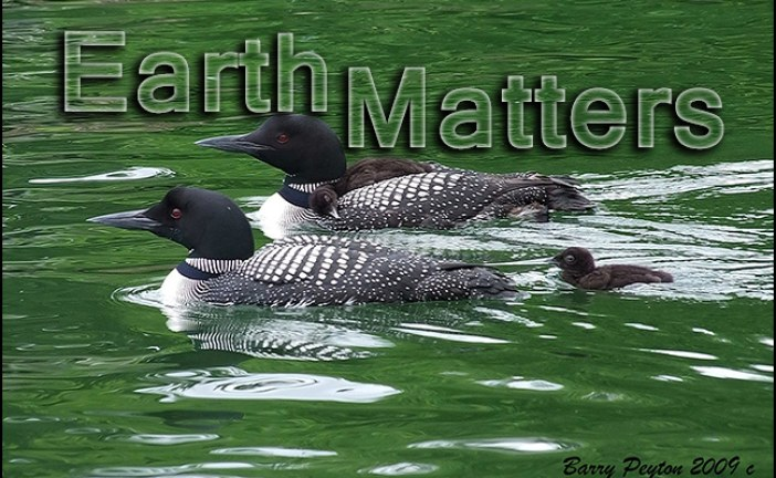 Pollutants Threaten Iconic Canadian Bird – Earth Matters by Jacqueline Milner
