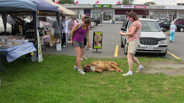 Dog Day Afternoon at Long Sault Market 2Aug13