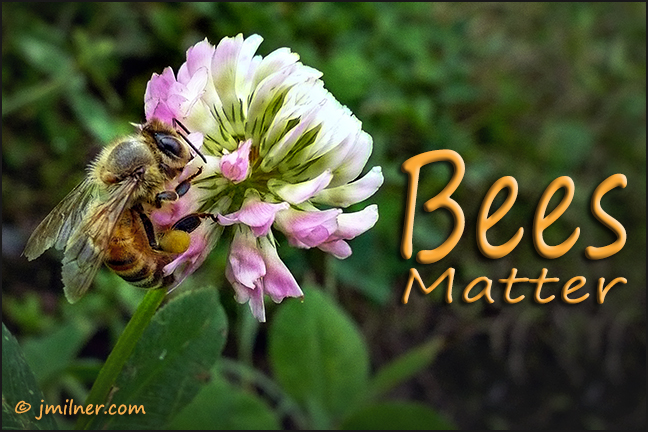Bees Matter.  They feed us, they need our help…NOW.   by Jacqueline Milner