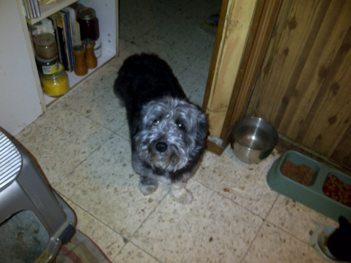 MISSING DOG ALERT – Rocky is still MISSING – If you see him please call 613 551 8470