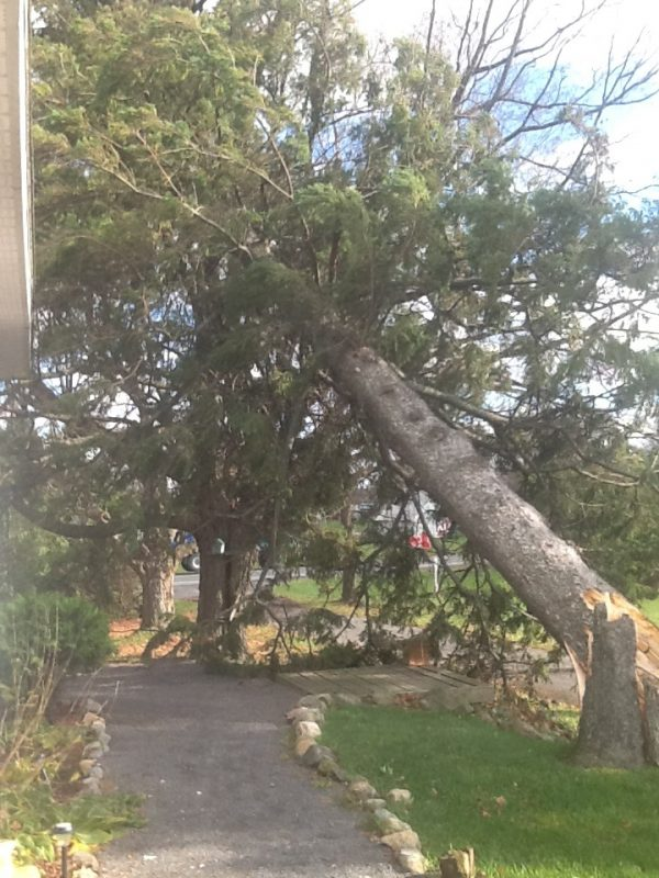 tray tree A