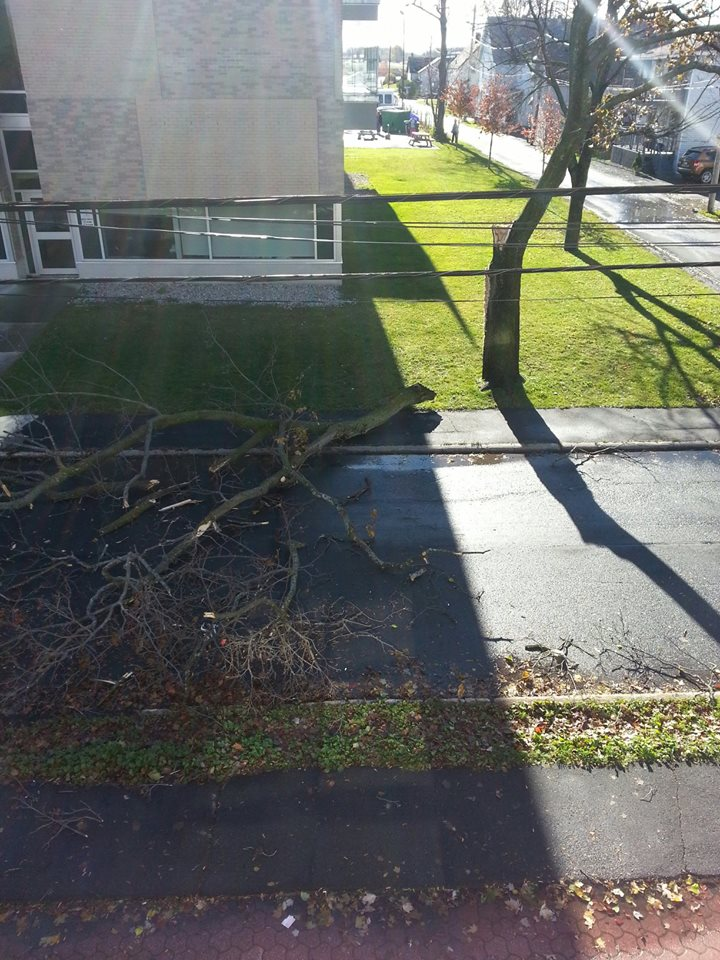 tree down cw 2