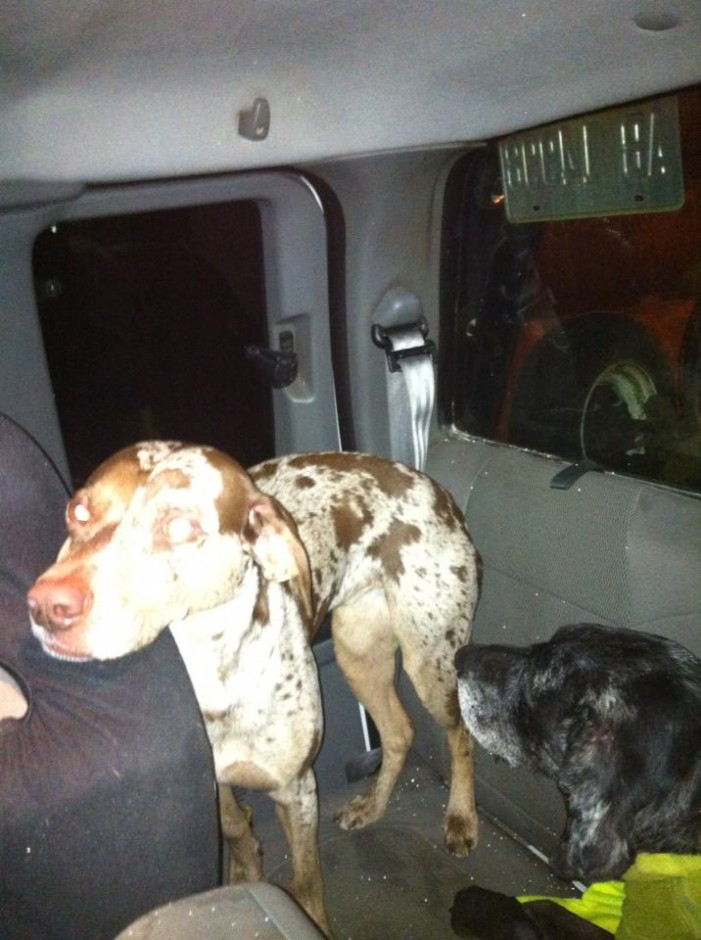Dogs Survive Toyota Rollover on Hwy 401 Near Cornwall Ontario – Tuesday Jan 7, 2014