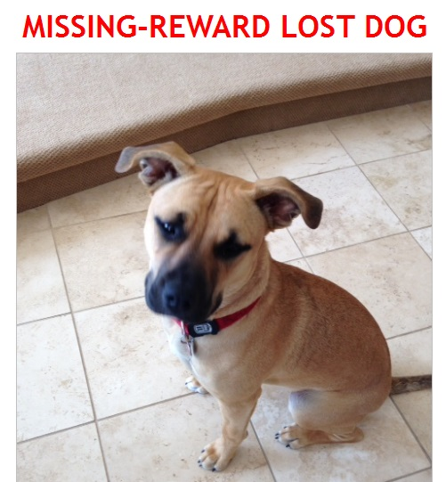 Have You Seen This Dog in the Lancaster Area?  Karma is Missing – REWARD – April 5, 2014