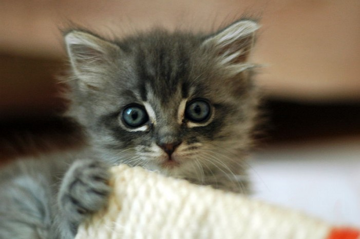Our CFN PSYCHO CUTE POST OF THE DAY!  Kittens Puppies Babies Bunnies!