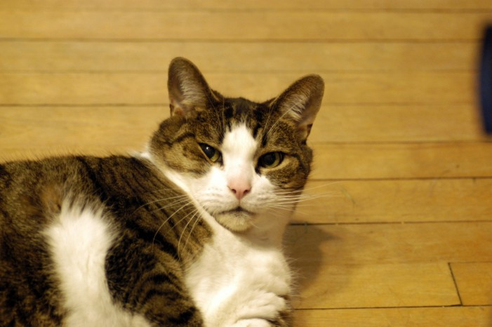 Losing a Life Long Pet is Never Easy by Jamie Gilcig – September 11, 2014
