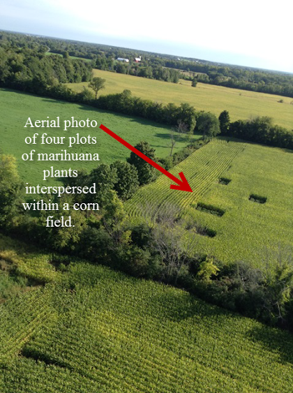 CRTF Does a Little Farming in Cornwall Ontario – Aerial Weed Finds 1,743 Plants SABOT