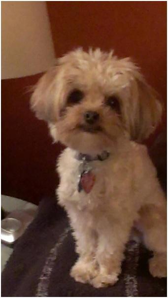 Dog Stolen From Vehicle in Ottawa Ontario OPS ALERT October 21, 2014