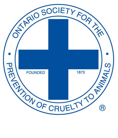 OSPCA Looking for Violent Teens After Attack on Turtle In Cornwall Ontario  – Oct 17, 2014