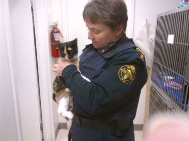 OSPCA Charges 25 Year Old Cornwall Ontario Man Over Cat Left in Garbage Bag – JAN 27, 2015