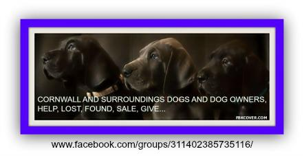 Cornwall Animal Advocacy Group Offering REWARD For Capture of Dog Abuser MAY 29, 2015