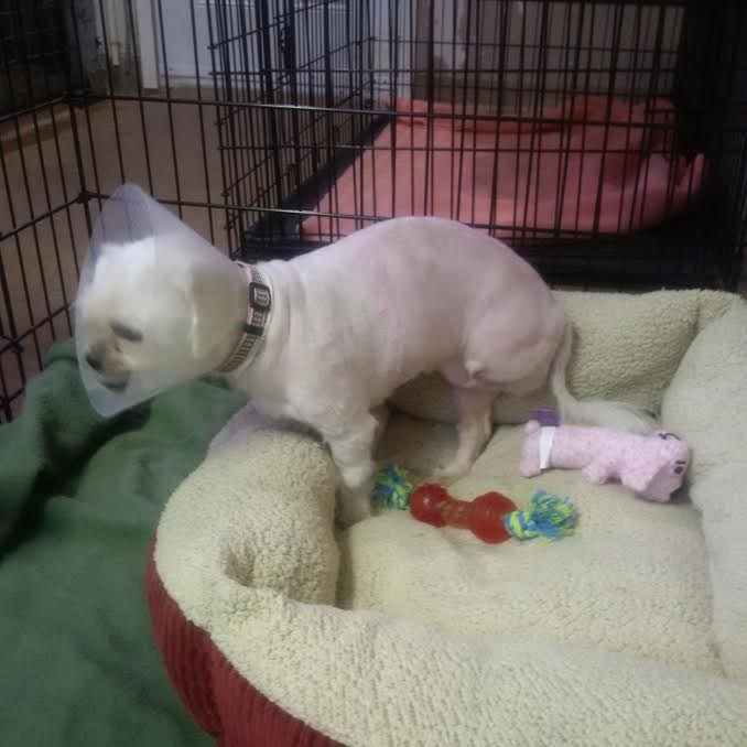 Cornwall Couple Charged After Dog Needed Amputation APRIL 25, 2017