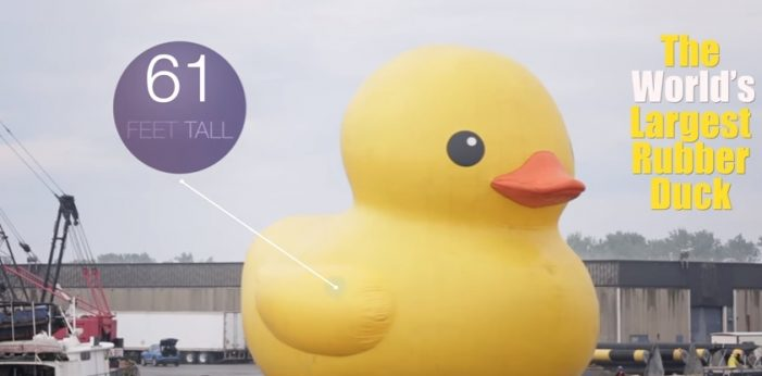 Cornwall Snubbed by Wynne Gov't As Big Rubber Duck Expected to Draw 30K in Brockville 081017