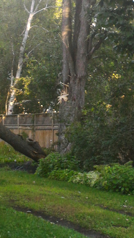 Large Tree Limb Felled By Storm In Cornwall Ontario 080617