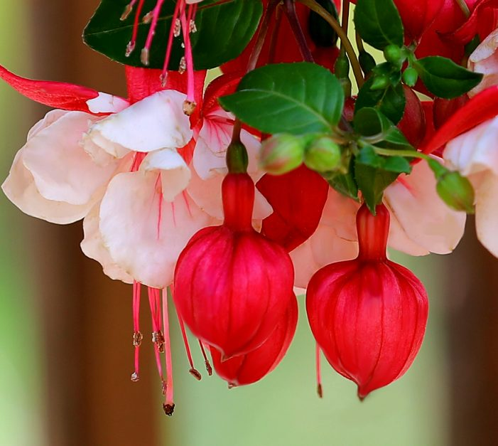 Cornwall Photographer Calvin Hanson's Garden – SPRING is here!  051718