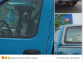 Scofflaw Leaves Dog in Truck in 30c Heat in Cornwall Ontario