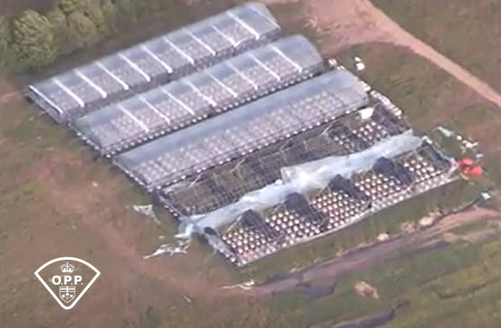 OPP SEIZES OVER 2100 CANNABIS PLANTS NORTH OF BROCKVILLE